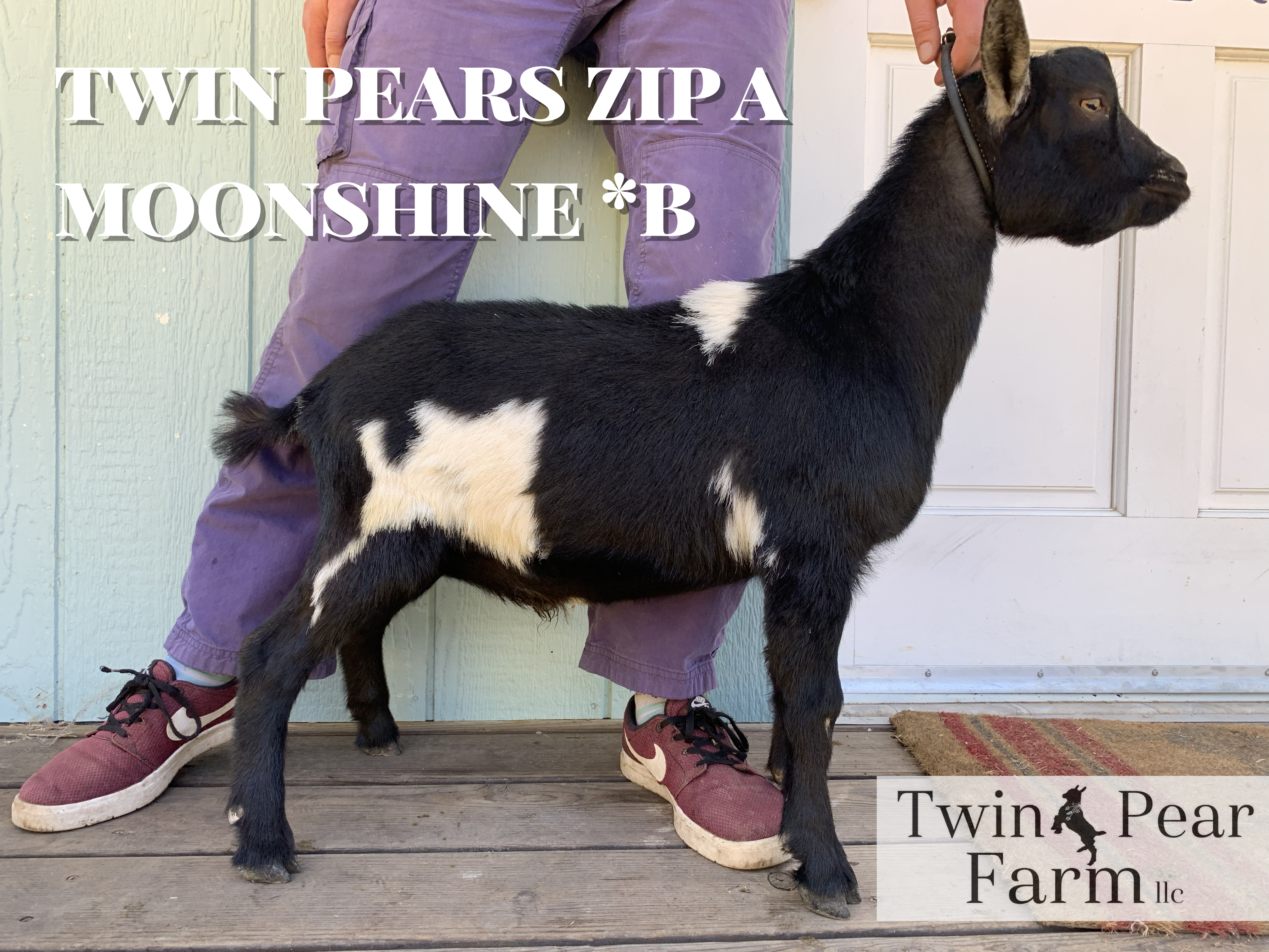 https://twinpearfarm.com/wp-content/uploads/2019/06/moonshine.jpg